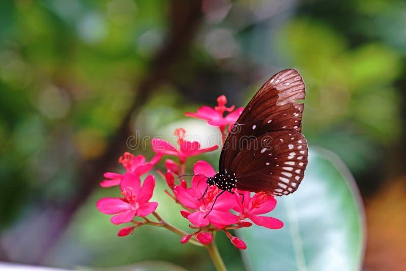 Mariposa, insectos hermosos y coloridos fotos de archivo libres de regalías
