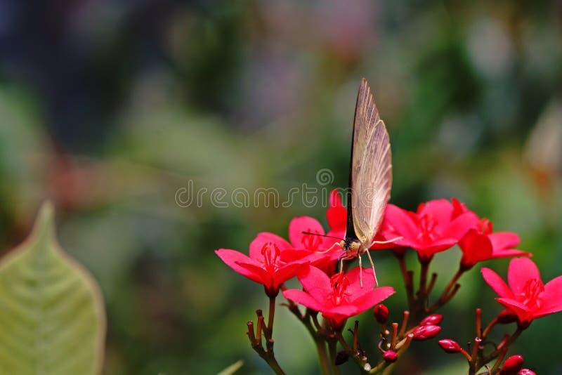 Mariposa, insectos hermosos y coloridos foto de archivo libre de regalías