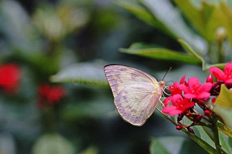 Mariposa, insectos hermosos y coloridos foto de archivo