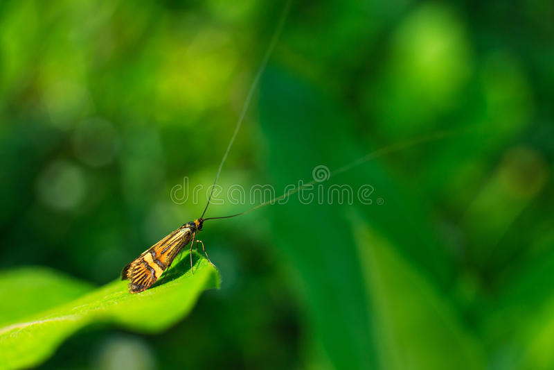 Mariposa larga de la antena imagen de archivo