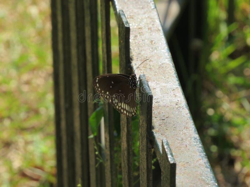 Mariposa manchada en un parque durante un paseo por la mañana fotografía de archivo