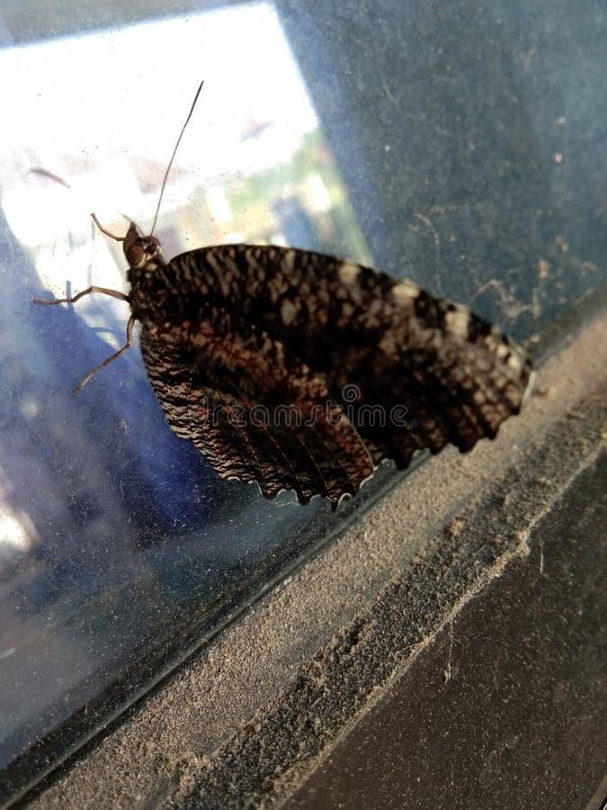 Mariposa marrón modelada, sobre el vidrio foto de archivo