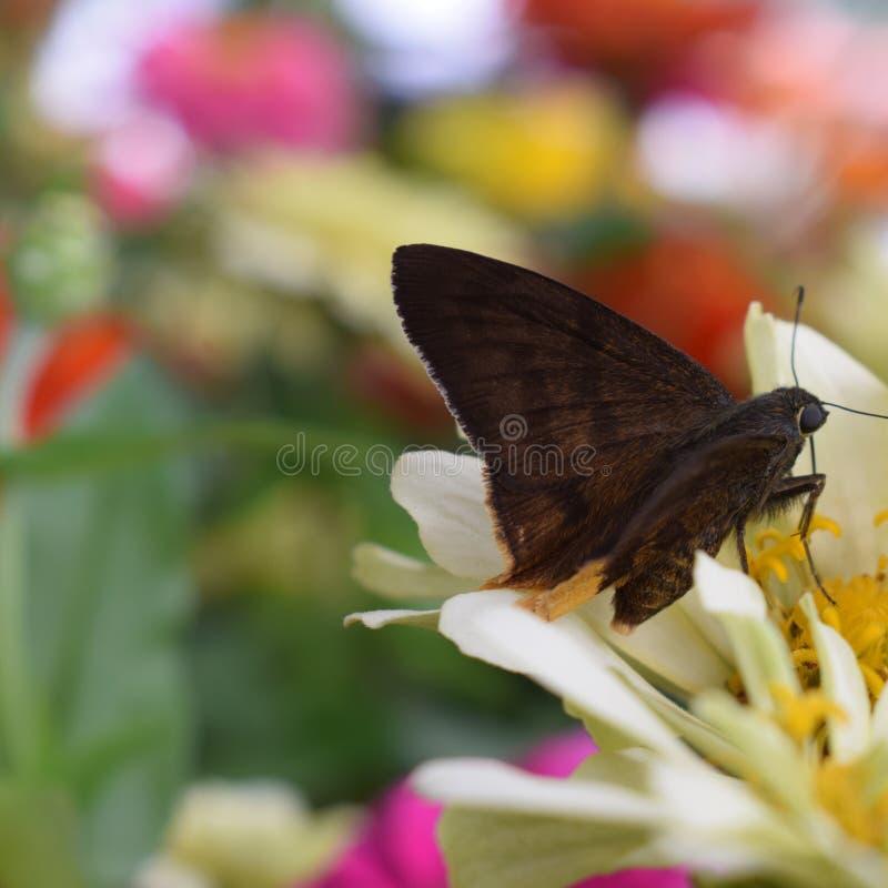 Mariposa multicolora imagen de archivo