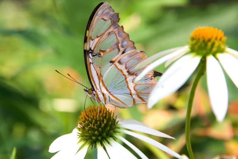 Download Mariposa multicolora imagen de archivo. Imagen de maravilla - 192929
