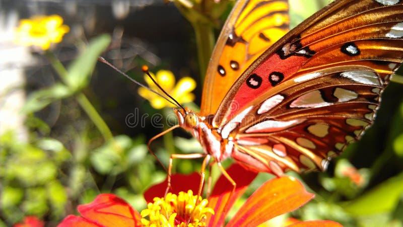 Mariposa stock photography