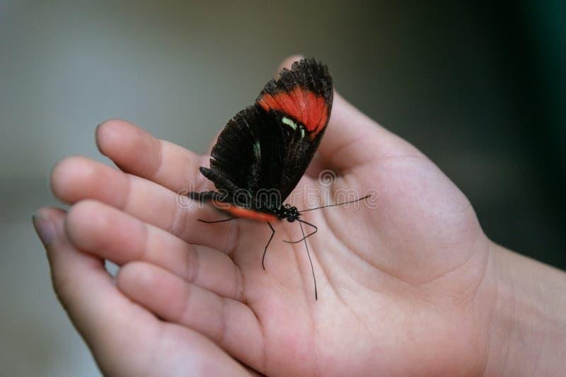 Mariposa negra que se sienta en las manos del niño fotos de archivo libres de regalías