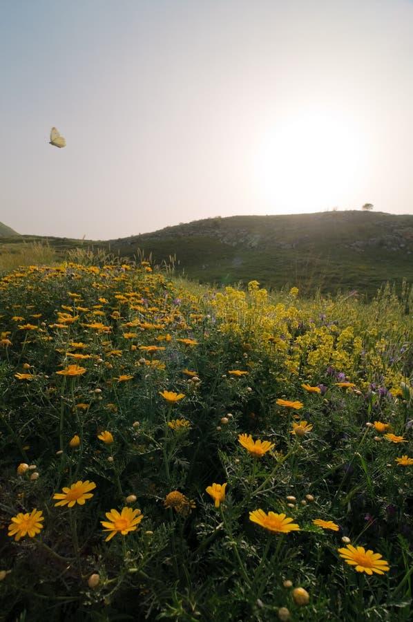 Mariposa que agita sobre el campo de flor imágenes de archivo libres de regalías