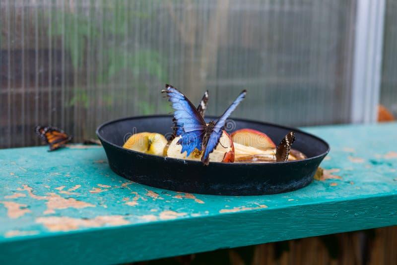 Mariposa que come la comida en jardín botánico imagen de archivo