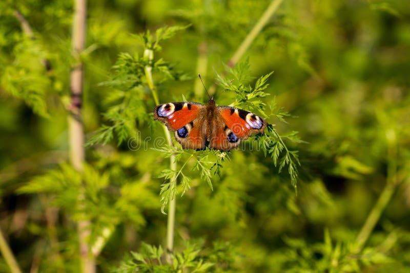 Mariposa que descansa sobre una planta verde foto de archivo libre de regalías