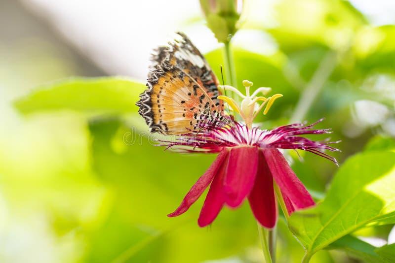 Mariposa que poliniza en la flor en jardín imagenes de archivo
