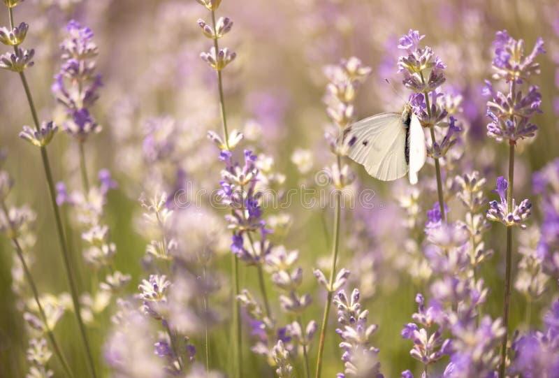 Mariposa que poliniza una flor imagen de archivo libre de regalías