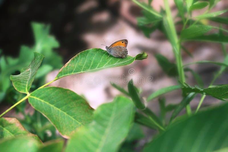 Mariposa que se sienta en una hoja del árbol en el jardín fotos de archivo