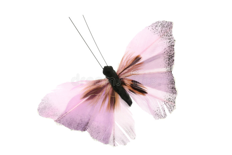 Mariposa rosada foto de archivo libre de regalías