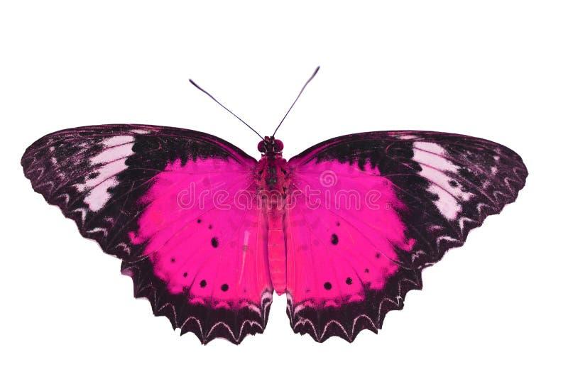 Mariposa rosada fotos de archivo