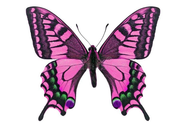 Mariposa rosada imagen de archivo libre de regalías