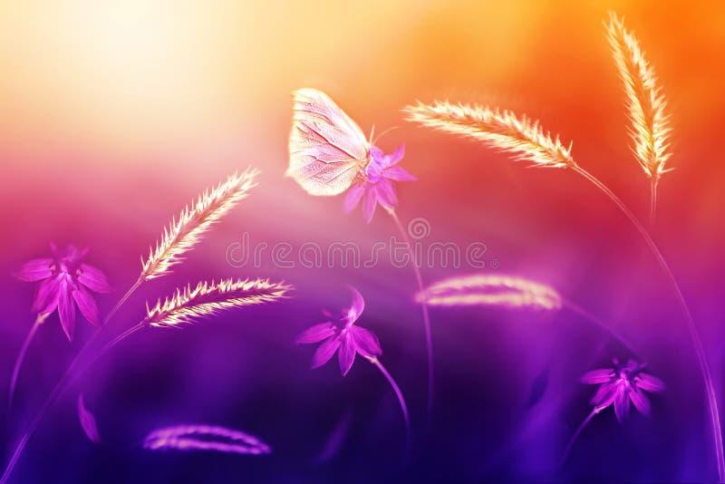 Mariposa rosada contra de las flores salvajes y la hierba en tonos púrpuras y amarillos Fondo artístico natural del verano Foco s foto de archivo