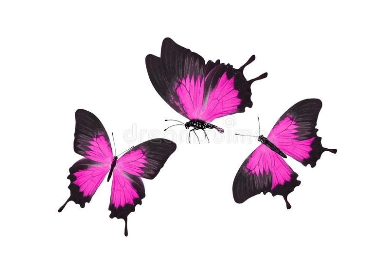 Mariposa rosada tropical Aislado en blanco imágenes de archivo libres de regalías