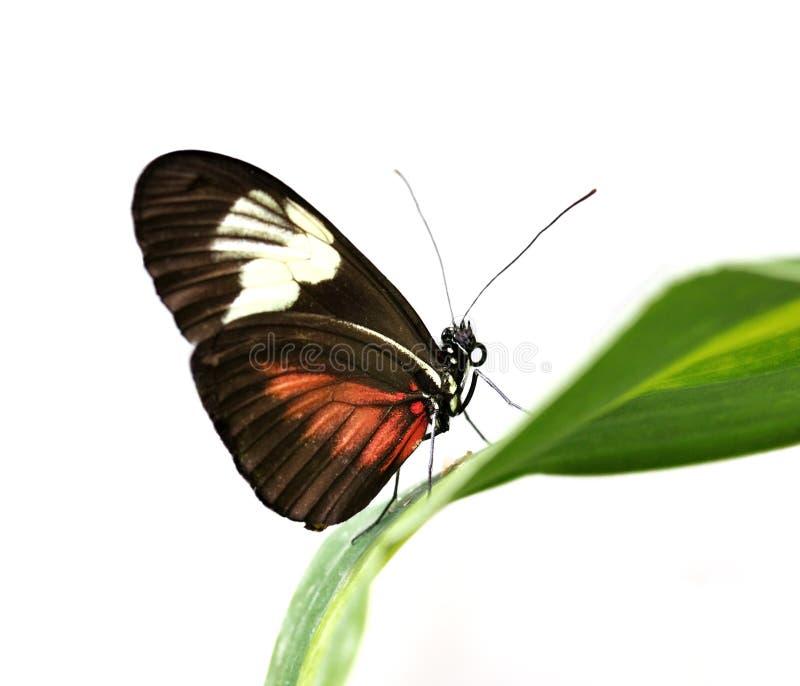 Mariposa tropical imagen de archivo