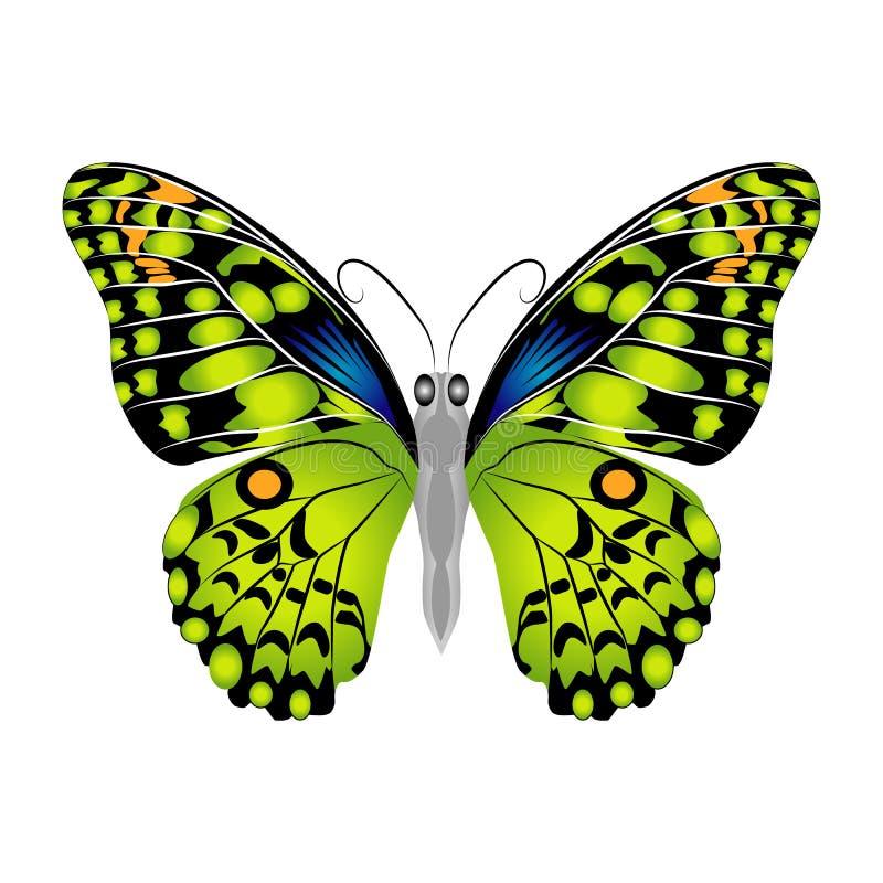 Mariposa verde hermosa brillante Ilustración del vector aislada foto de archivo
