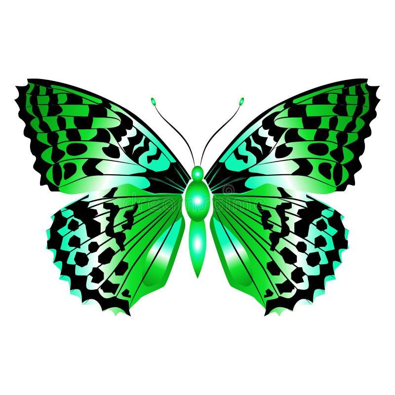 Mariposa verde hermosa brillante Ilustración del vector aislada imagen de archivo