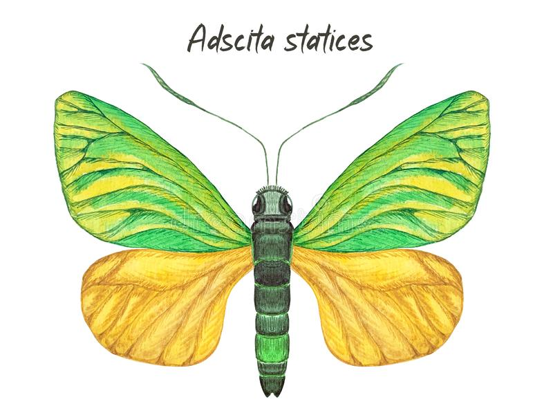Mariposa verde y amarilla, ejemplo de la acuarela stock de ilustración