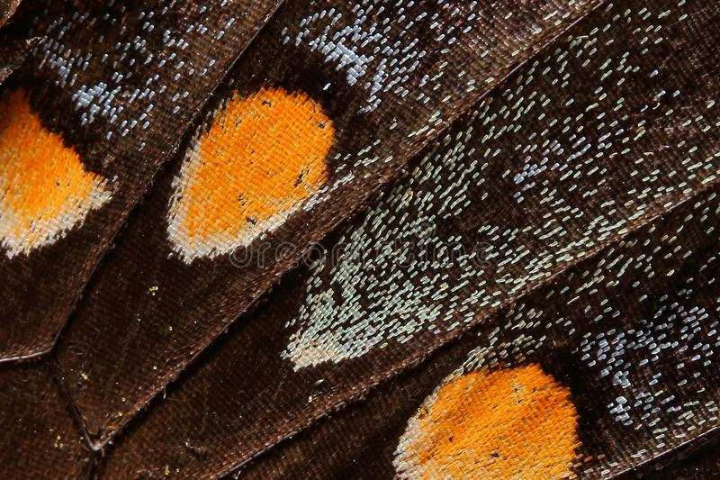 Mariposa Wing Macro foto de archivo