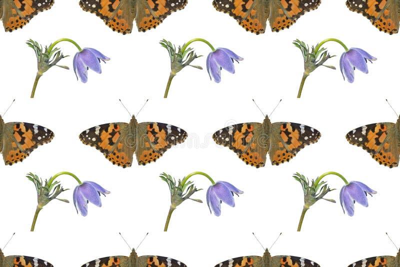 Mariposa y flor silvestre Patrón transparente imagen de archivo libre de regalías