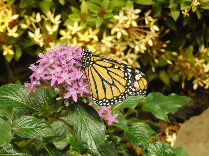 Mariposa y flores imagenes de archivo