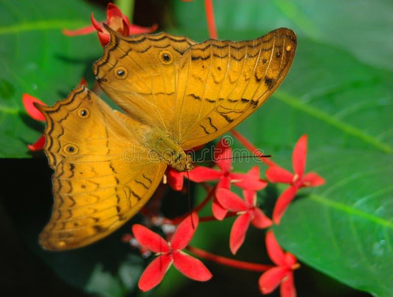 Mariposa y flores de Julia fotos de archivo