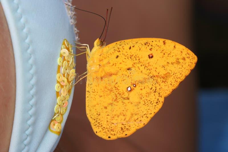 Mariposa y mujer 6 imágenes de archivo libres de regalías