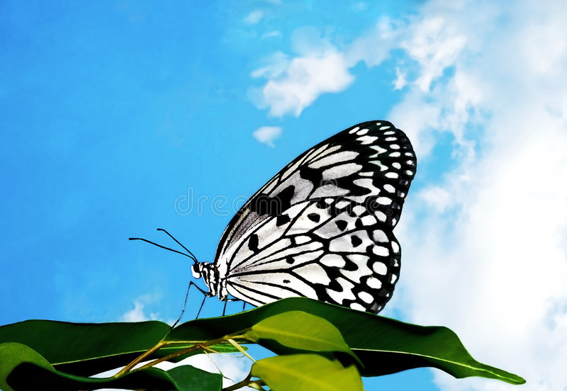 Mariposa y nubes foto de archivo