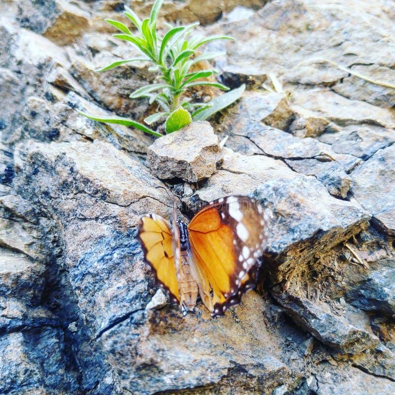 Mariposa y planta fotografía de archivo libre de regalías