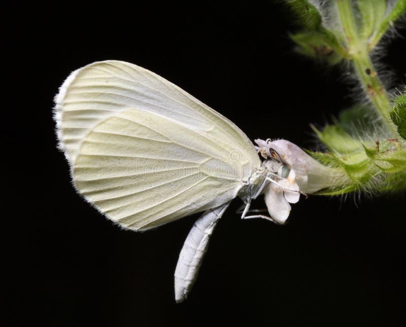 Mariposa y una flor. imagen de archivo libre de regalías