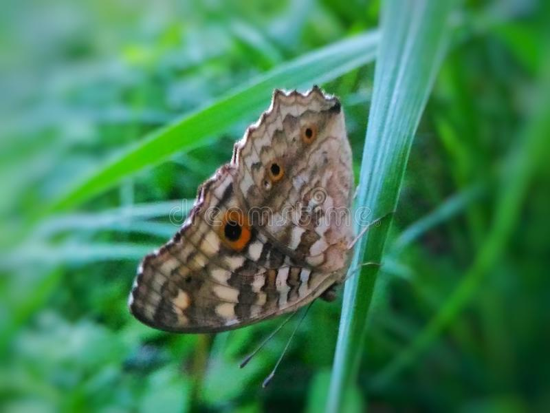 Mariposas imágenes de archivo libres de regalías