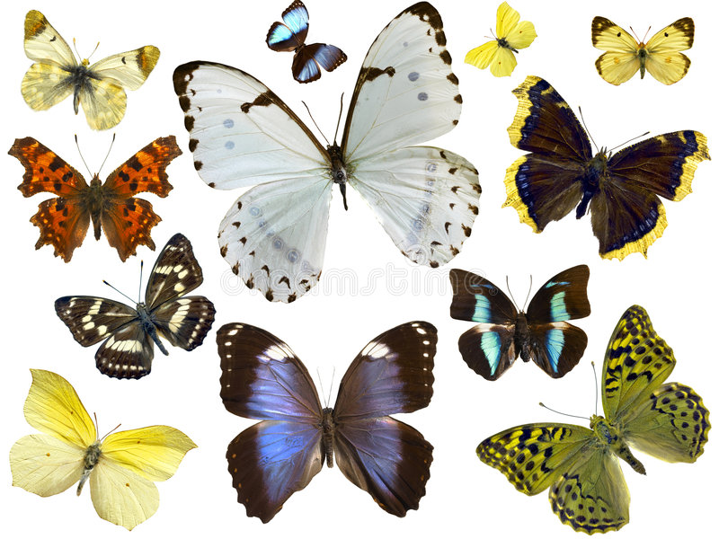 Mariposas aisladas fotografía de archivo