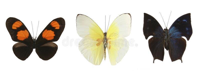 Mariposas coloridas sobre un fondo blanco fotografía de archivo libre de regalías