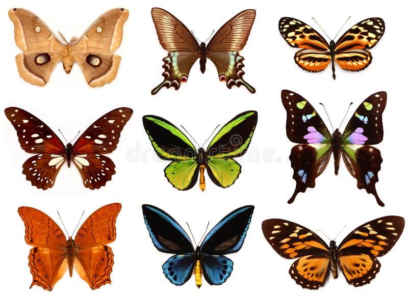 Mariposas de Colorfull imágenes de archivo libres de regalías