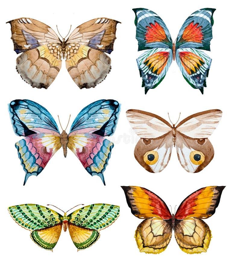 Mariposas de la trama de la acuarela stock de ilustración