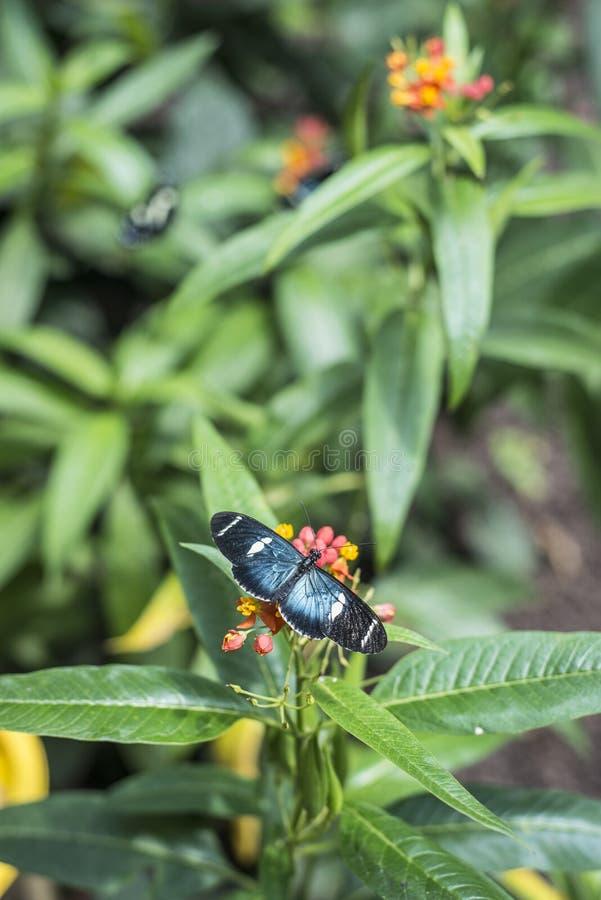 Mariposas en la flor exótica foto de archivo libre de regalías