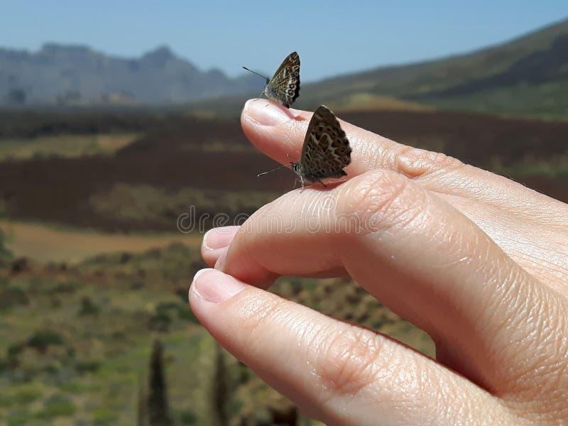 Mariposas en los fingeres imagen de archivo