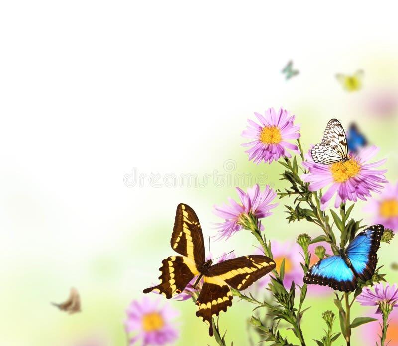 Mariposas en prado fotografía de archivo