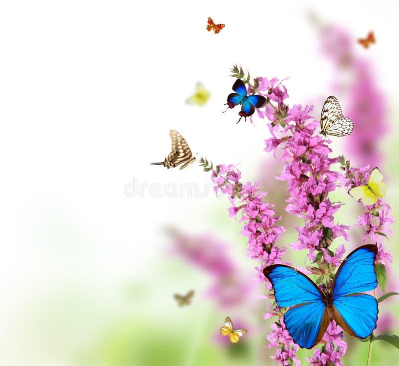 Mariposas en prado imágenes de archivo libres de regalías