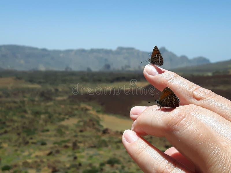Mariposas en una mano imagen de archivo libre de regalías