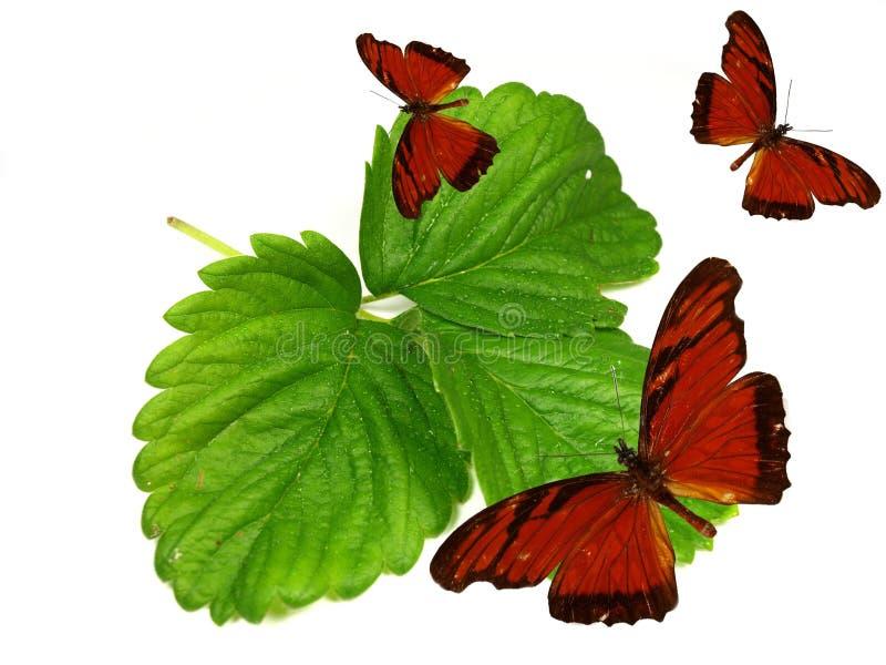 Mariposas exóticas en las hojas verdes frescas imagen de archivo