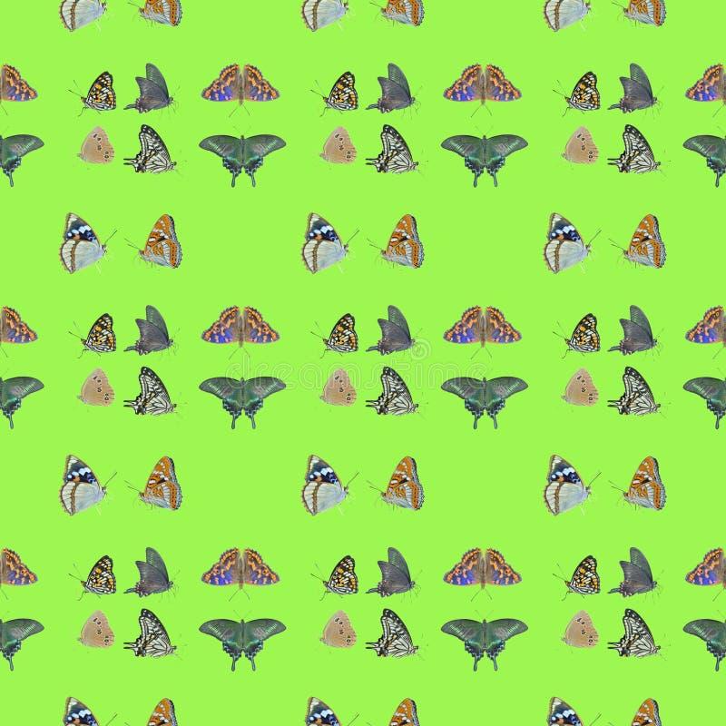 Mariposas Patrón transparente foto de archivo libre de regalías