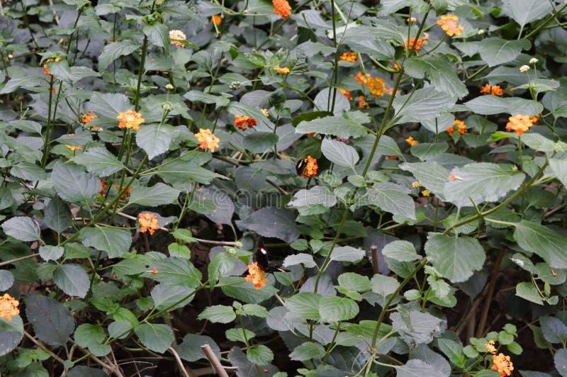 Mariposas, plantas y flores botánicas foto de archivo