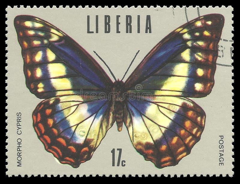 Mariposas tropicales, Cypris Morpho imagen de archivo