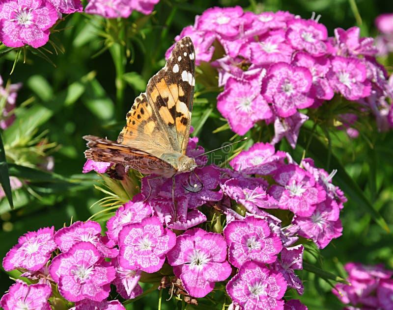 Mariposas y flor floreciente púrpura imagenes de archivo