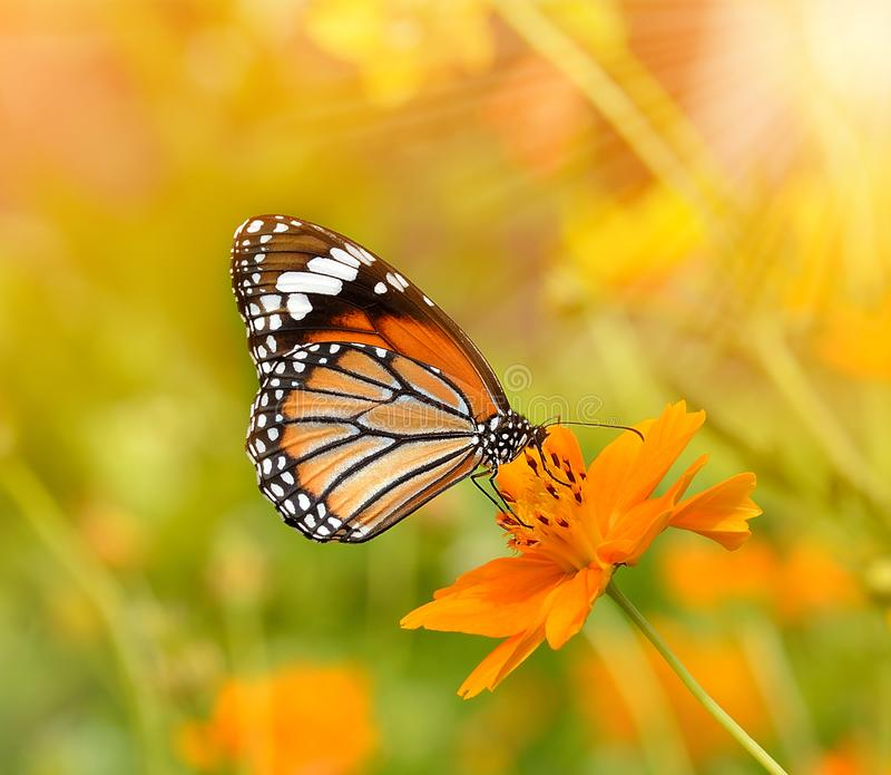 Mariposas y flores foto de archivo