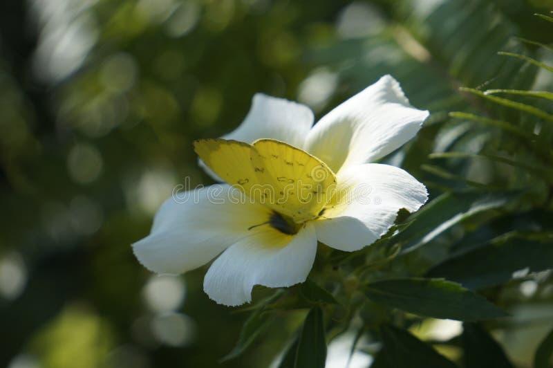 Mariposas y flores en un jardín fotos de archivo